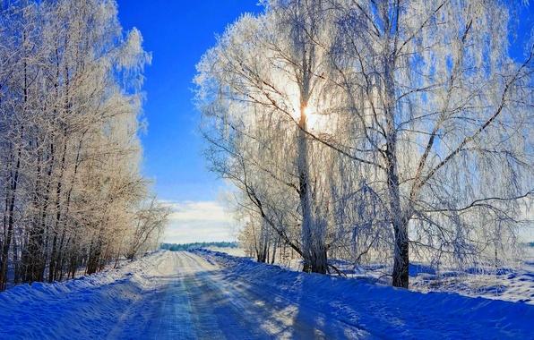 Картинка зима, дорога, лес, небо, снег, деревья, пейзаж, природа, white, forest, road, sky, trees, nature, sunset, …