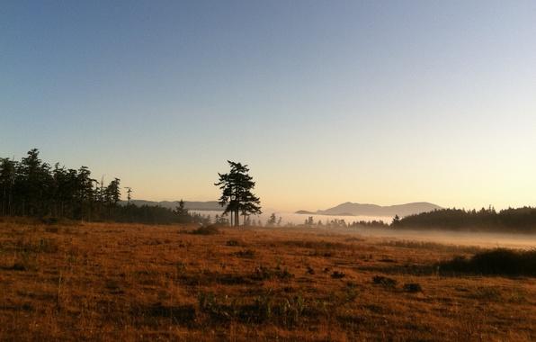 Картинка горы, природа, туман, озеро, утро, morning, mist with meadow and tree