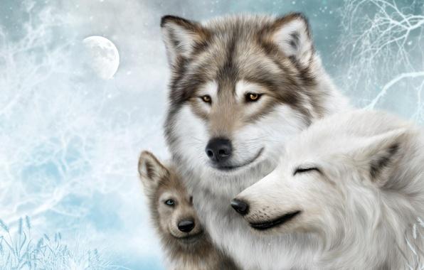 Фото обои Волк, Wolf, стая, wolves, семья, moon, луна, волки, белый, фон, снег, snow, family