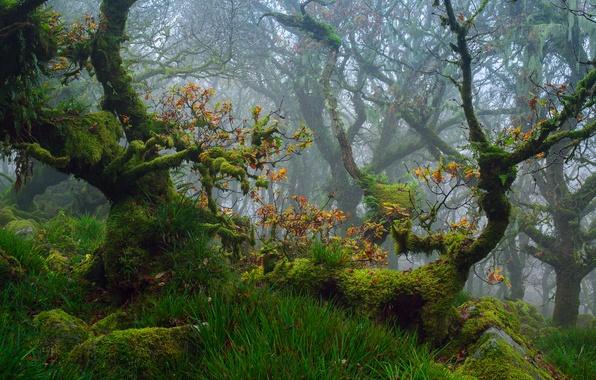 Картинка осень, лес, трава, деревья, ветки, листва, мох, дубы, Октябрь, графство Девон, национальный парк Дартмур, Юго-Западная …
