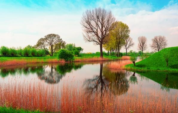 Картинка Англия, Природа, весна, Май