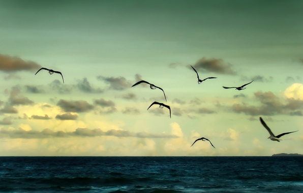 Картинка море, небо, свобода, вода, облака, полет, пейзаж, птицы, природа, река, фон, океан, widescreen, птица, обои, …