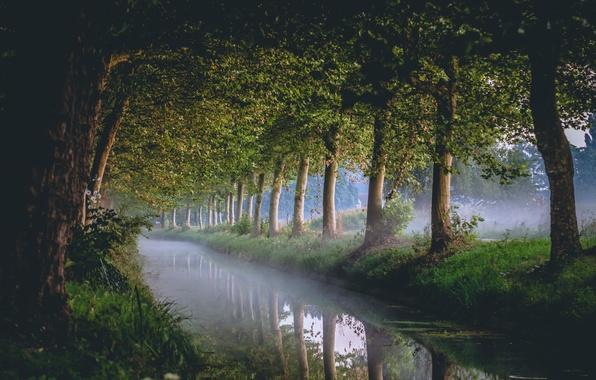 Картинка деревья, природа, канал
