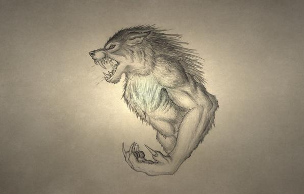 Картинка волк, оборотень, рычит, wolf, werewolf