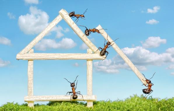 Картинка макро, насекомые, работа, стройка, мох, муравьи, бревна, домик, обои от lolita777