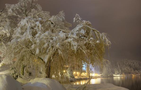 Картинка зима, снег, деревья, ночь, огни, туман, озеро, фонари, сугробы, Словения, Bled