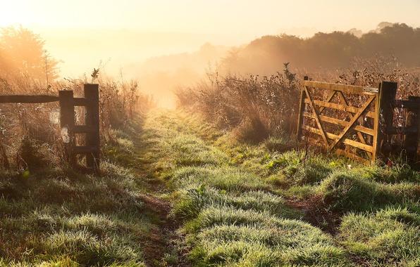 Картинка поле, пейзаж, природа, туман, забор, утро