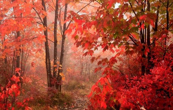 Картинка лес, листья, красный, Осень