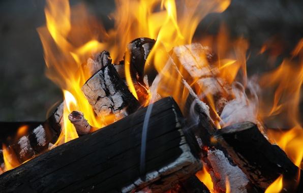 Картинка природа, фон, дерево, огонь, обои, костер, дрова, разное, горение