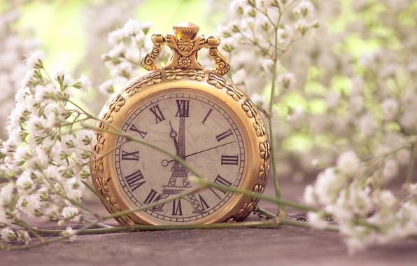 Картинка макро, цветы, эйфелева башня, часы, париж, белые, paris, карманные, мелкие