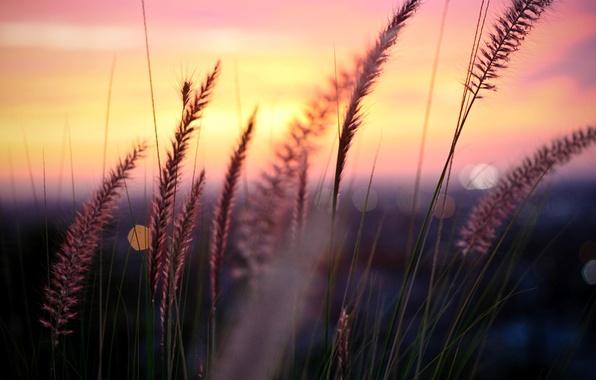 Картинка зелень, небо, листья, солнце, облака, макро, деревья, закат, цветы, природа, фон, дерево, widescreen, обои, листва, …
