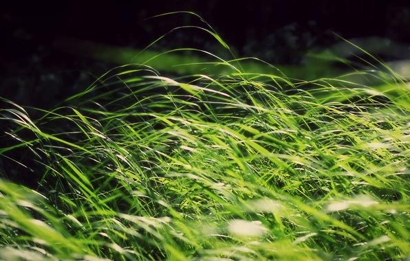 Картинка зелень, трава, солнце, ветер
