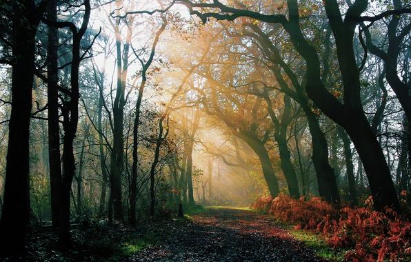 Картинка дорога, осень, лес, лучи, свет, природа, утро, после дождя