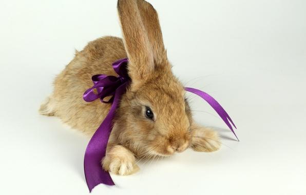 Картинка подарок, заяц, кролик, зверек, бант, ушки