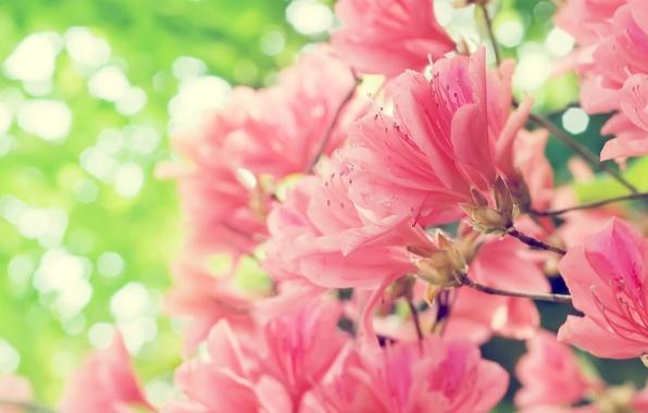 Обои цветы розовые