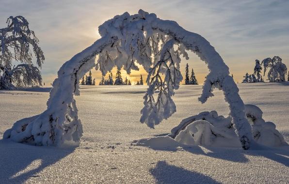 Картинка зима, снег, деревья, арка, Швеция, Sweden, Lapland, Лапландия