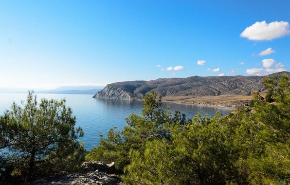 Пейзаж сосны побережье чёрное море