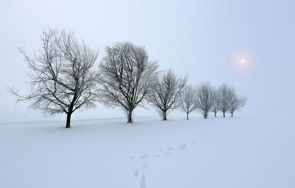 Картинка зима, поле, снег, деревья