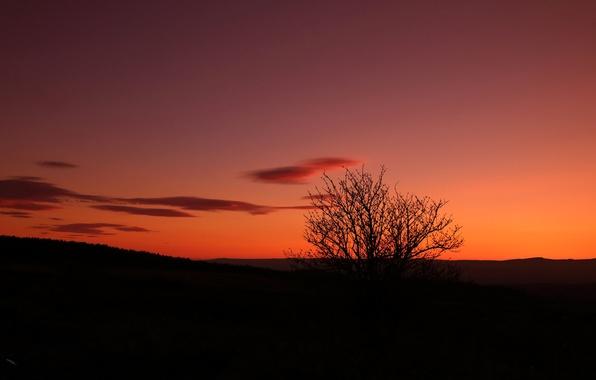 Картинка небо, дерево, силуэт, зарево