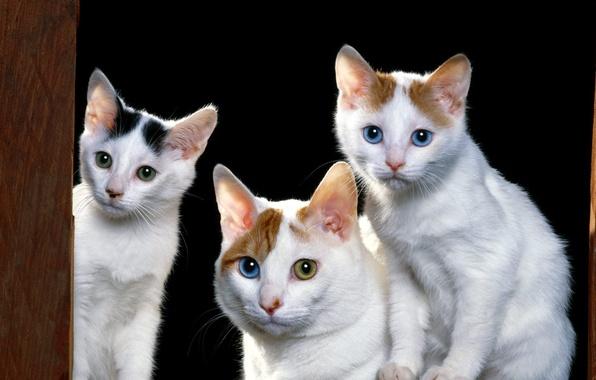 Картинка животные, котята