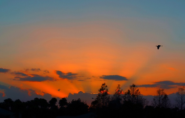 Картинка небо, деревья, закат, тучи, птица, силуэт, зарево