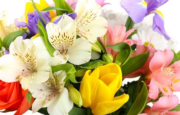 Картинка цветы, тюльпаны, белый фон, ирисы, белые хризантемы, Альстромерия