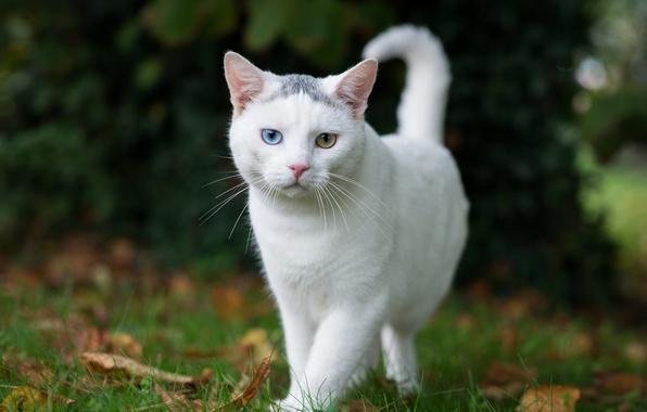 Картинка кошка, лето, глаза, белая