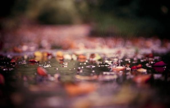 Картинка осень, листья, вода, капли, макро, брызги, парк, лужи, фотографии