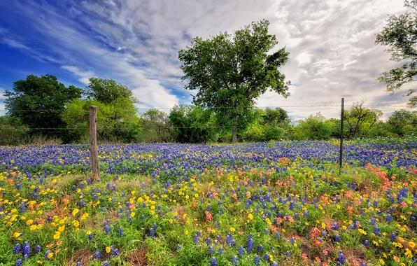 Фото обои цветы, небо, весна, природа
