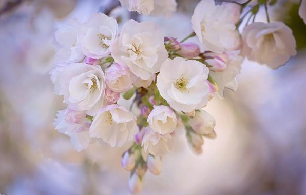 Картинка макро, весна, сад