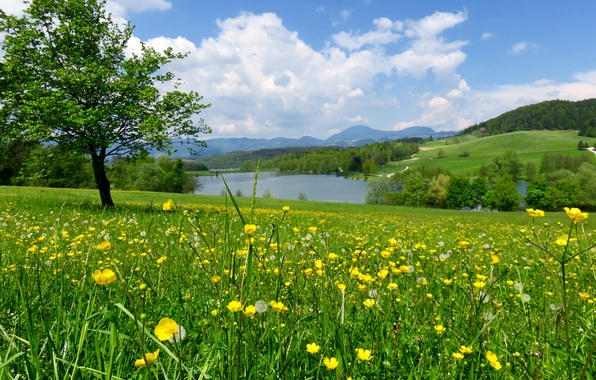 Картинка зелень, поле, лес, лето, трава, цветы, река, дерево, склон, луг, одуванчики, Словения, лютики, Mozirje