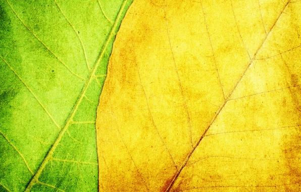 Картинка листья, желтый, зеленый, фон, текстура
