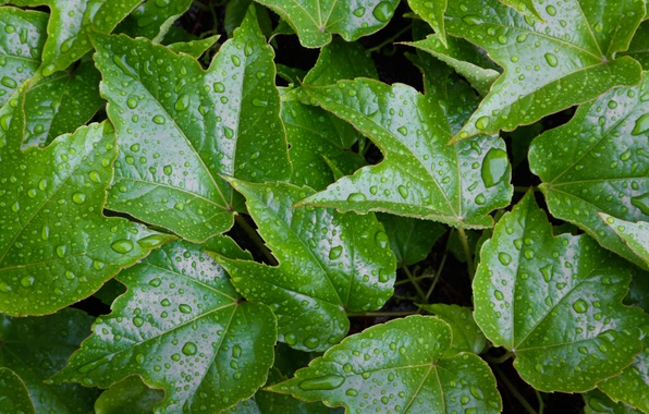 Картинка green, wet, water, pattern, leaves