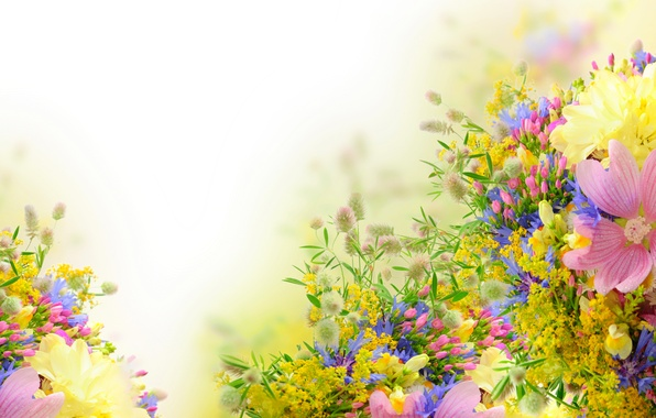 flower wallpaper for kindle fire - photo #30