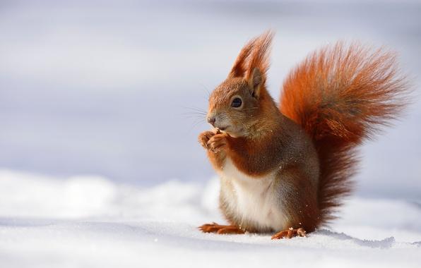 фото рысь зимой