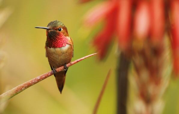 Картинка птица, ветка, перья, клюв, колибри