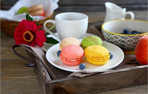 Картинка цветы, еда, чашка, сладости, цветочки, flowers, macaroon, макарун
