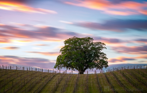 Картинка поле, небо, облака, дерево, выдержка, Австралия