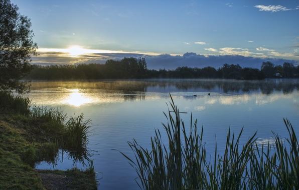 Картинка небо, трава, солнце, облака, деревья, закат, озеро, берег, утки