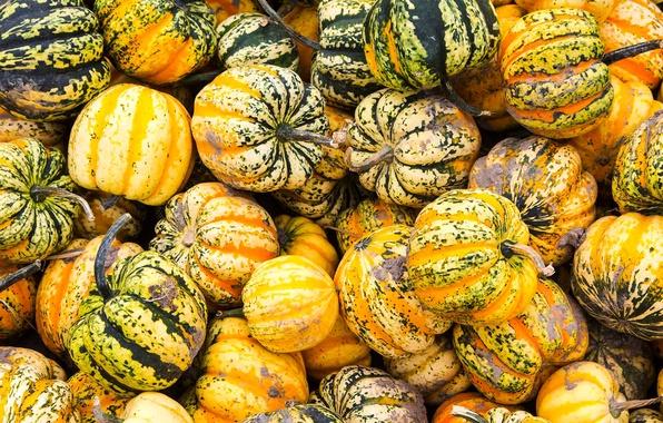Картинка осень, краски, текстура, урожай, Канада, фестиваль тыквы