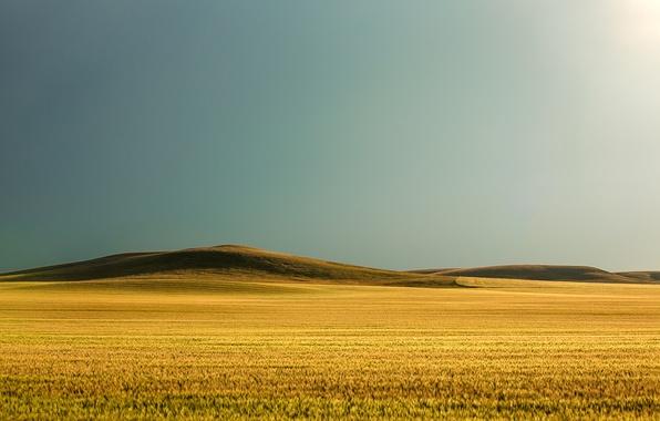 Картинка поле, трава, солнце, холмы, grass, sunshine, field, hills