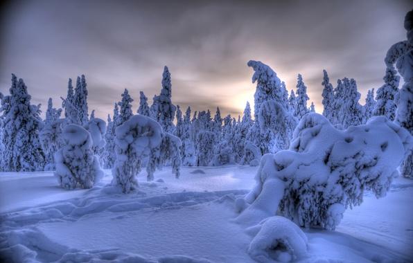 Картинка зима, лес, снег, деревья, Финляндия, Finland, Lapland, Лапландия, Ylläs, Äkäslompolo, Акасломполо, Юлляс