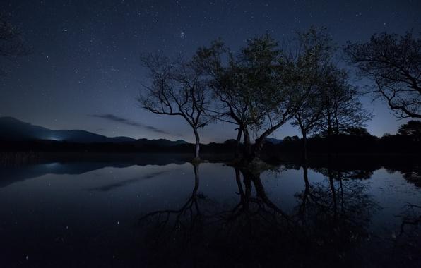Картинка небо, звезды, свет, деревья, ветки, озеро, отражение, зеркало, силуэт, холм