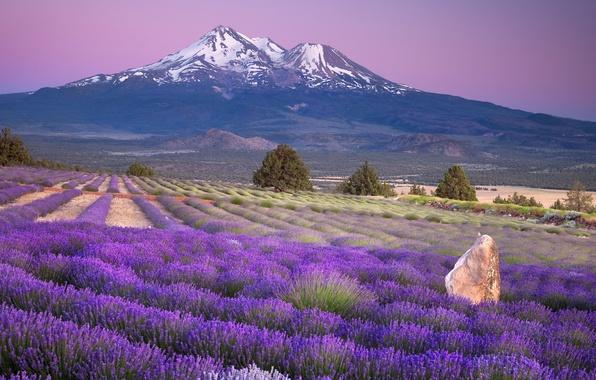 Картинка поле, пейзаж, цветы, горы, Природа, лаванда