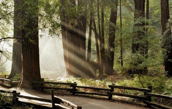 Картинка лес, лучи, тропинка