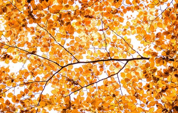 Картинка осень, листья, ветки, дерево, краски, текстура