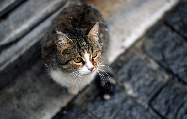 Картинка кошка, кот, усы, взгляд, сидит, Cat