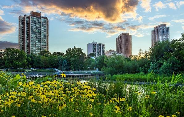 Картинка небо, трава, облака, деревья, пейзаж, закат, цветы, город, пруд, парк, небоскребы, вечер, желтые, Чикаго, USA, …