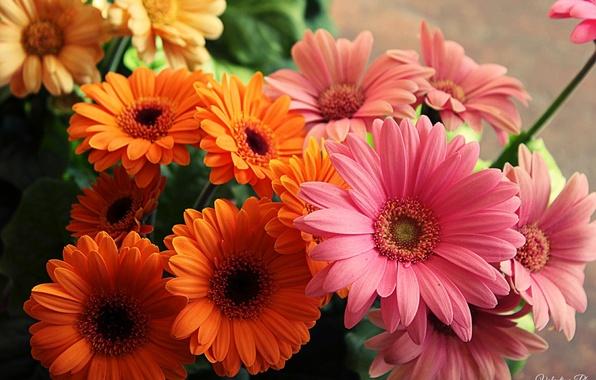 Картинка цветы, оранжевый, желтый, розовый, яркие, букет, красивые, yellow, pink, flowers, beautiful, orange, bouquet, bright