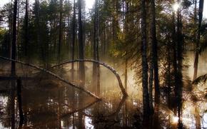 Обои лес, свет, деревья, природа